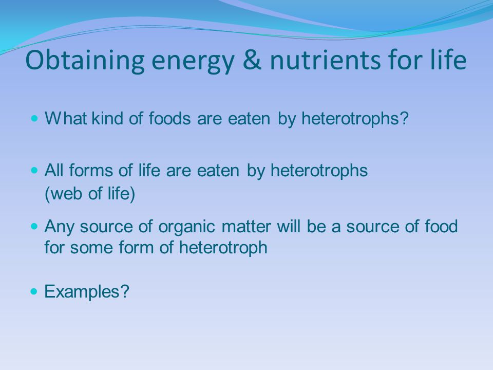 Obtaining energy & nutrients for life What kind of foods are eaten by heterotrophs.