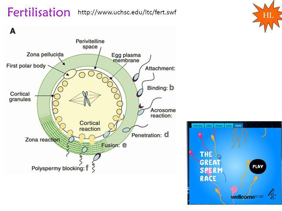 Fertilisation HL http://www.uchsc.edu/ltc/fert.swf