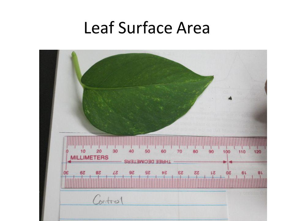 Leaf Surface Area