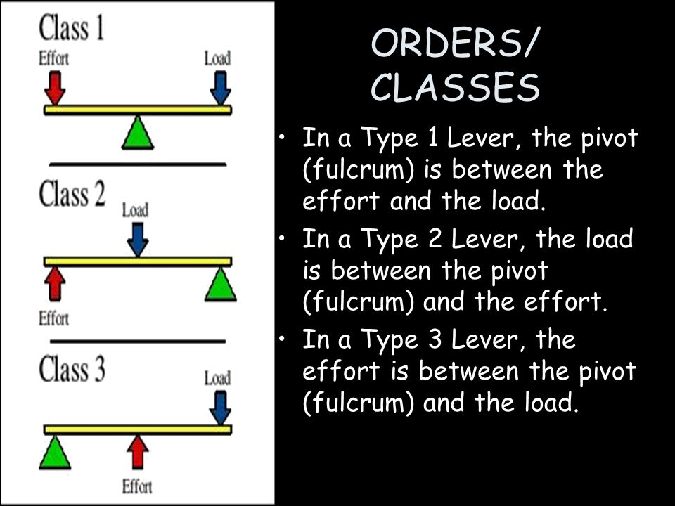 ORDERS/ CLASSES In a Type 1 Lever, the pivot (fulcrum) is between the effort and the load. In a Type 2 Lever, the load is between the pivot (fulcrum)
