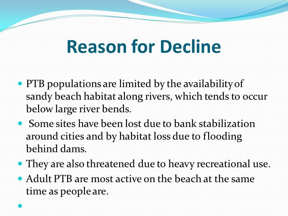 Reason for Decline PTB populations are limited by the availability of sandy beach habitat along rivers, which tends to occur below large river bends.