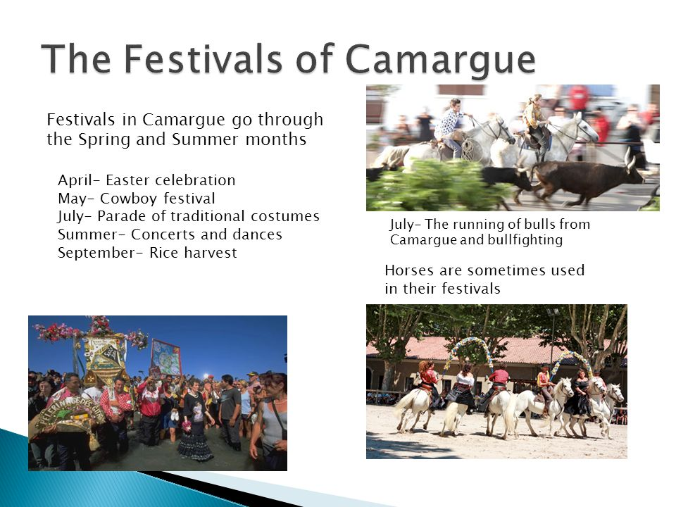 Festivals in Camargue go through the Spring and Summer months July- The running of bulls from Camargue and bullfighting April- Easter celebration May- Cowboy festival July- Parade of traditional costumes Summer- Concerts and dances September- Rice harvest Horses are sometimes used in their festivals