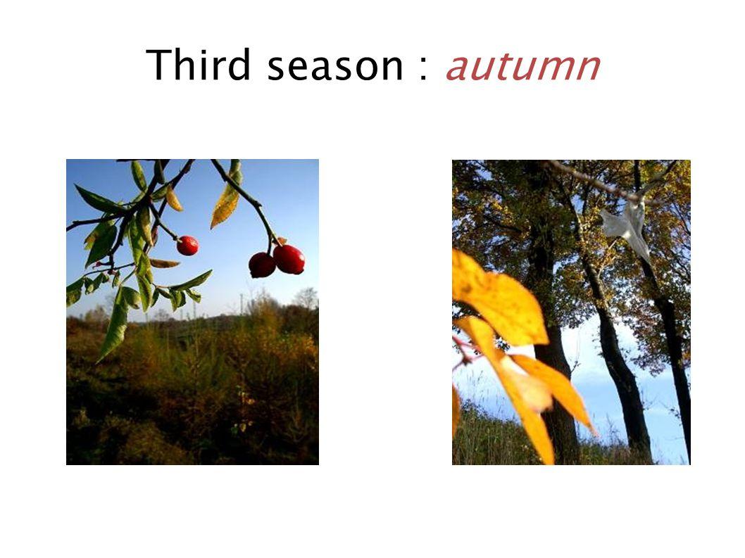 Third season : autumn