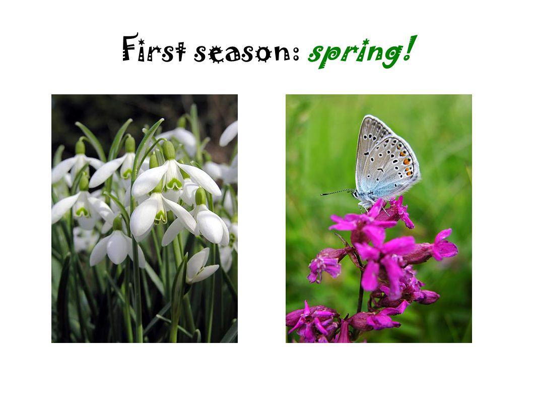 First season: spring!