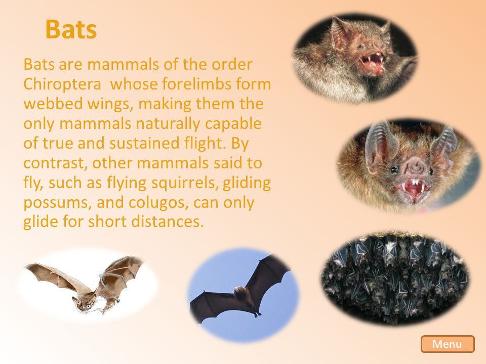 Bats Bats are mammals of the order Chiroptera whose forelimbs form webbed wings, making them the only mammals naturally capable of true and sustained flight.
