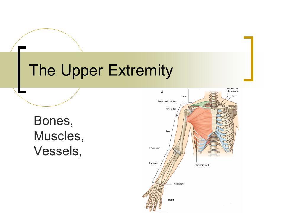 Bones 30 bones!!!.