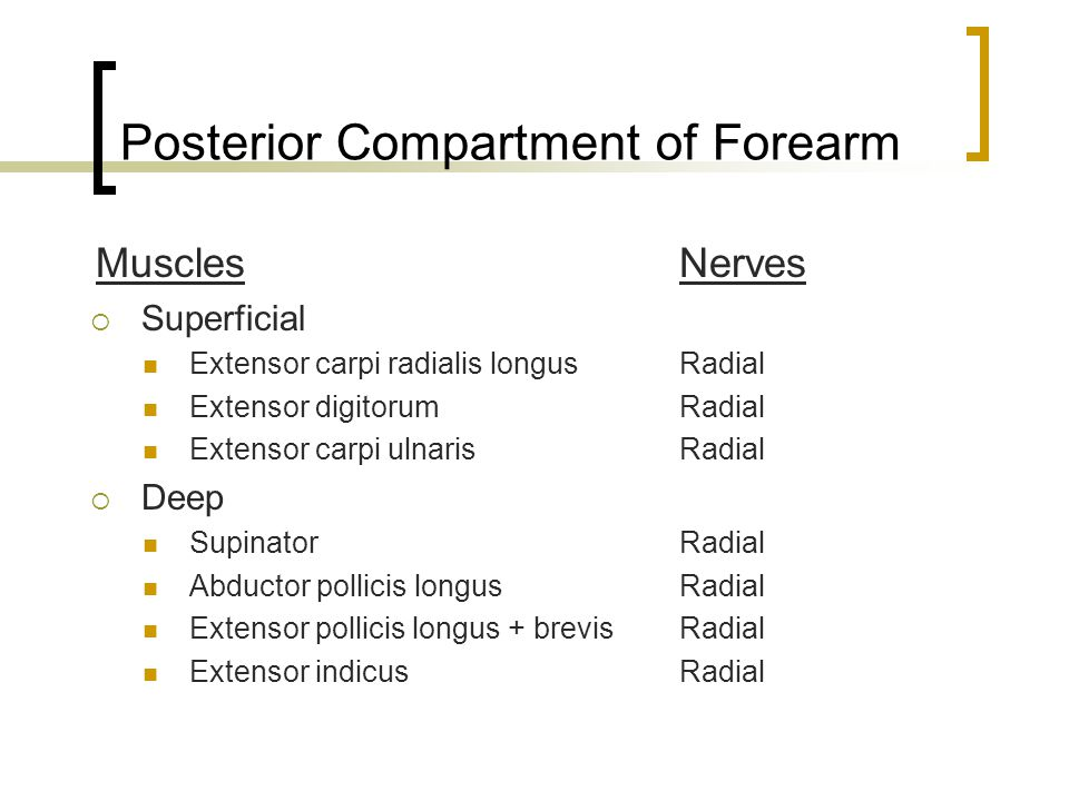Posterior Compartment of Forearm Muscles Nerves  Superficial Extensor carpi radialis longus Radial Extensor digitorum Radial Extensor carpi ulnarisRa