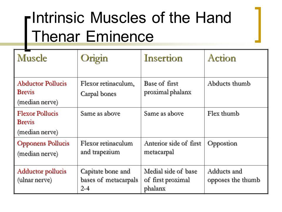 Intrinsic Muscles of the Hand Thenar Eminence MuscleOriginInsertionAction Abductor Pollucis Brevis (median nerve) Flexor retinaculum, Carpal bones Bas