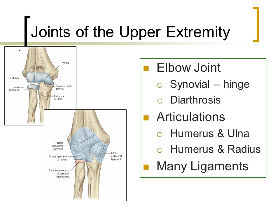 Joints of Upper Extremity Proximal Radioulnar joint  Synovial - pivot  Diarthrosis Distal Radioulnar joint  Synovial – pivot  Diarthrosis Allows pronation and supination of forearm