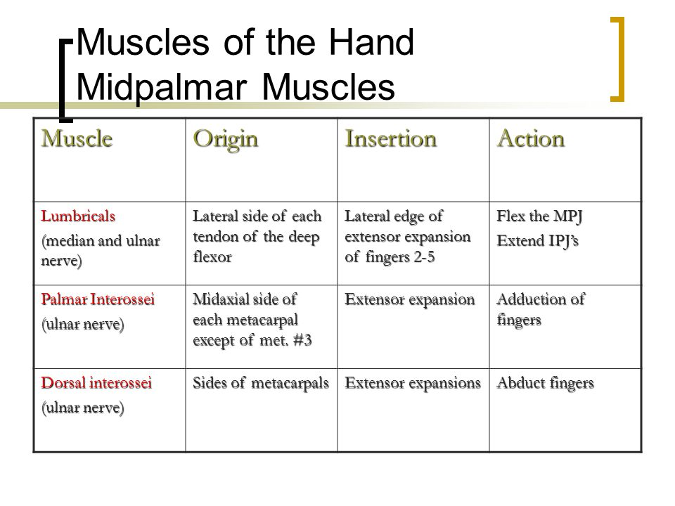 Muscles of the Hand Midpalmar Muscles MuscleOriginInsertionAction Lumbricals (median and ulnar nerve) Lateral side of each tendon of the deep flexor L