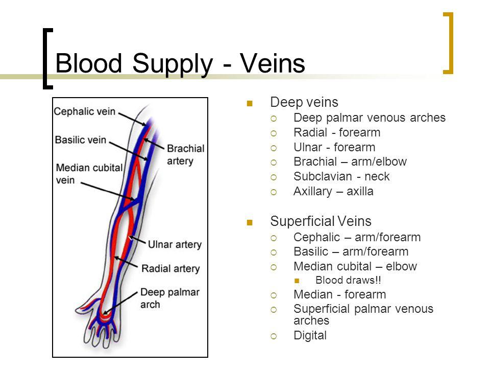Blood Supply - Veins Deep veins  Deep palmar venous arches  Radial - forearm  Ulnar - forearm  Brachial – arm/elbow  Subclavian - neck  Axillary