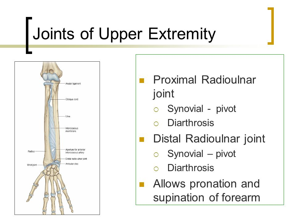 Joints of Upper Extremity Proximal Radioulnar joint  Synovial - pivot  Diarthrosis Distal Radioulnar joint  Synovial – pivot  Diarthrosis Allows p