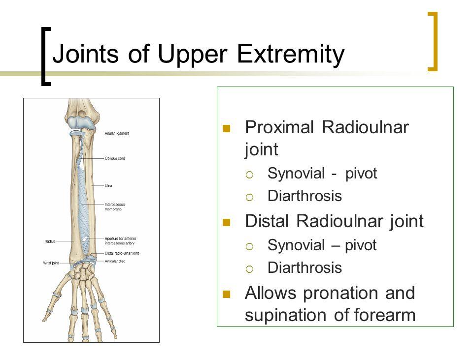 1.Vagus Nerve 2.Brachial Plexus 3.Radial Nerve 4.Axillary Nerve 5.Median Nerve 6.Ulnar Nerve