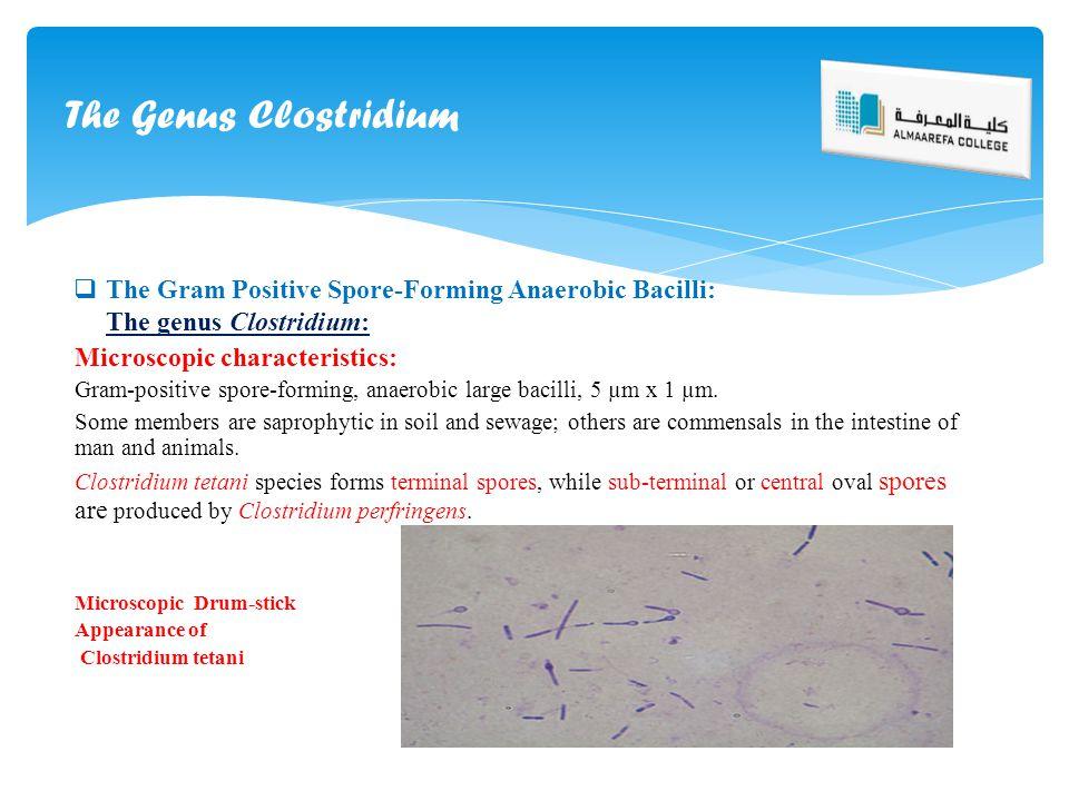  The Gram Positive Spore-Forming Anaerobic Bacilli: The genus Clostridium: Microscopic characteristics: Gram-positive spore-forming, anaerobic large