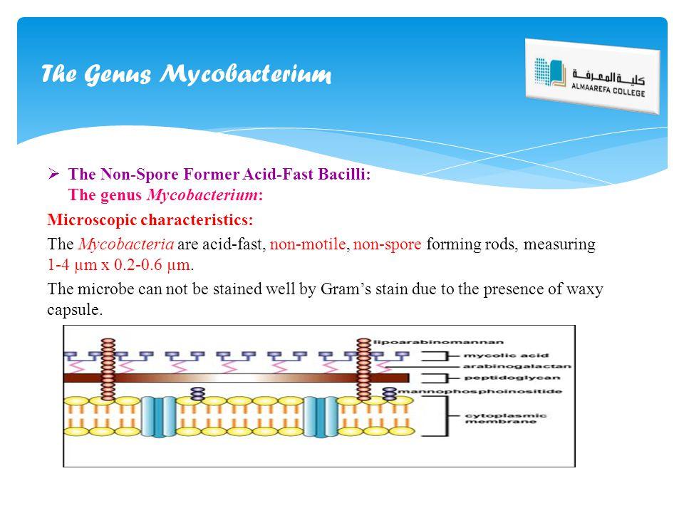  The Non-Spore Former Acid-Fast Bacilli: The genus Mycobacterium: Microscopic characteristics: The Mycobacteria are acid-fast, non-motile, non-spore
