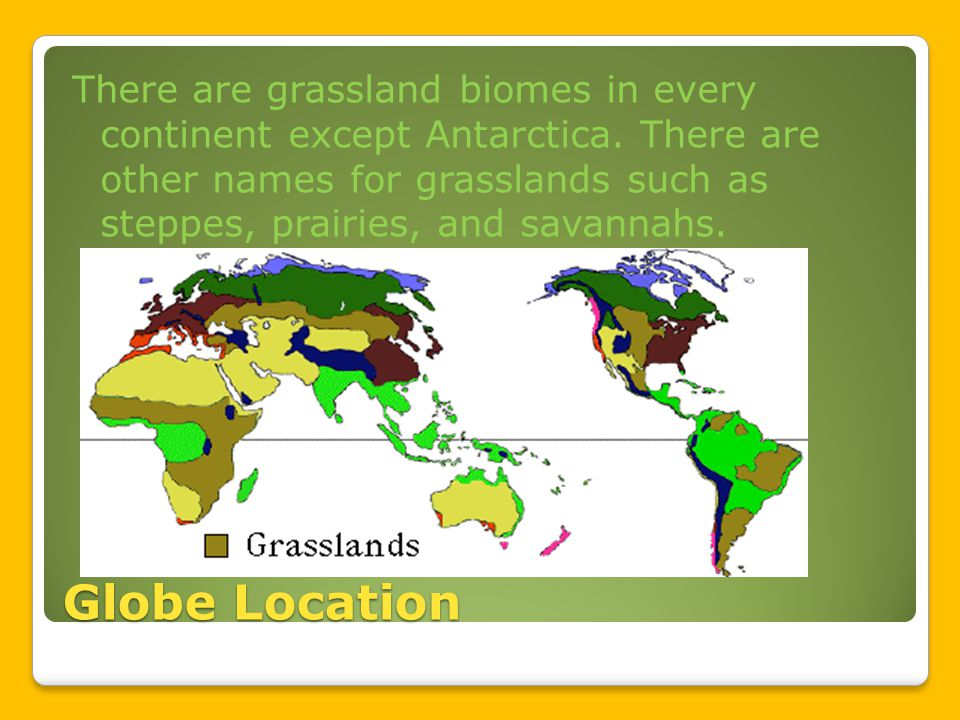 Globe Location There are grassland biomes in every continent except Antarctica.