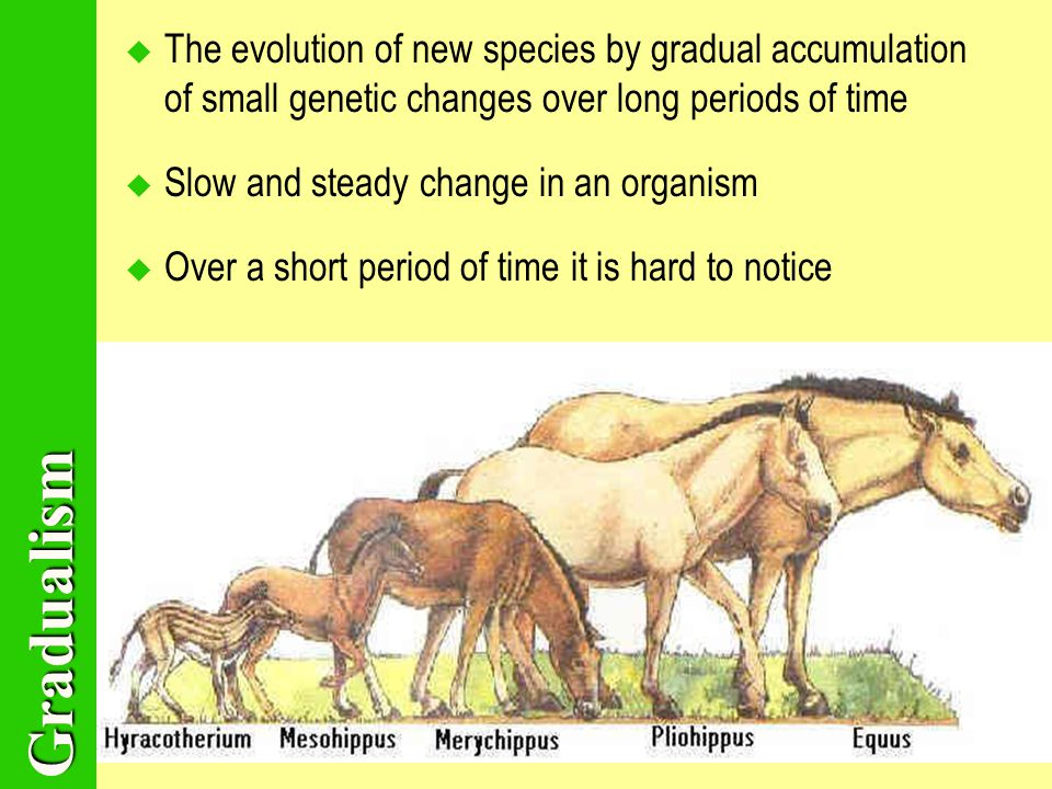 Gradualism TThe evolution of new species by gradual accumulation of small genetic changes over long periods of time SSlow and steady change in an organism OOver a short period of time it is hard to notice