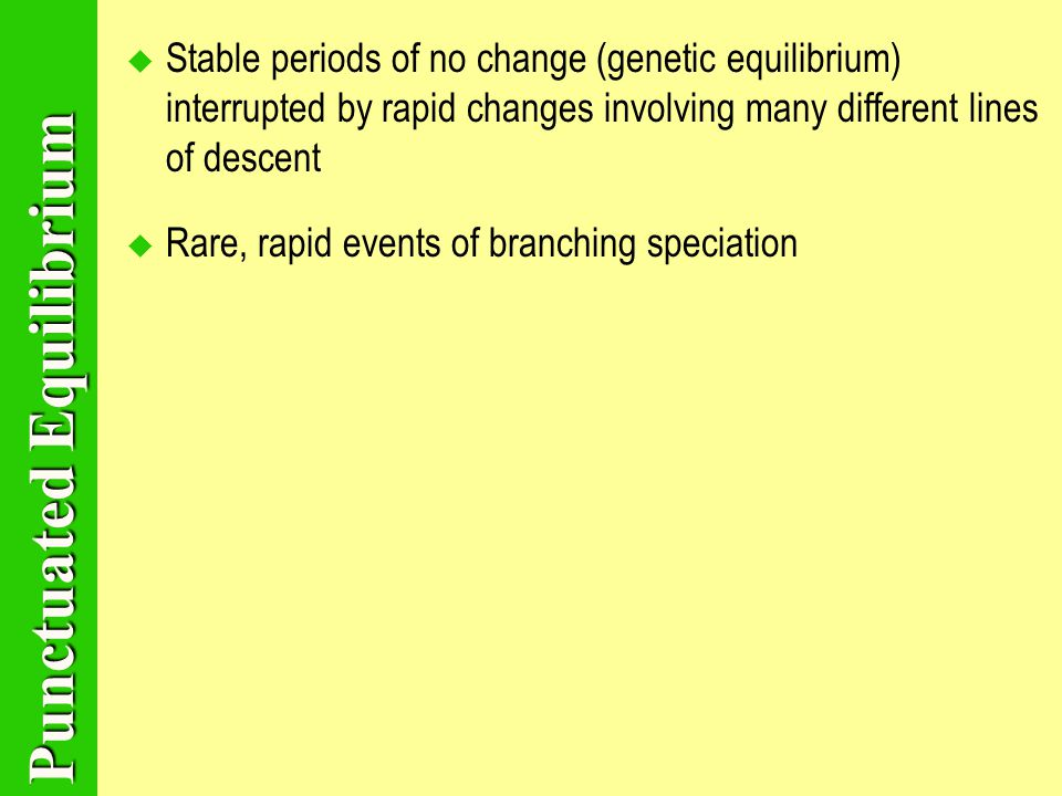 Punctuated Equilibrium SStable periods of no change (genetic equilibrium) interrupted by rapid changes involving many different lines of descent RRare, rapid events of branching speciation