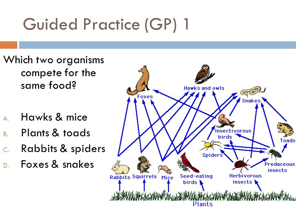 Guided Practice (GP) 1 Which two organisms compete for the same food? A. Hawks & mice B. Plants & toads C. Rabbits & spiders D. Foxes & snakes