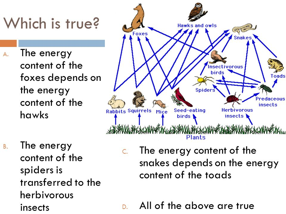 Which is true? A. The energy content of the foxes depends on the energy content of the hawks B. The energy content of the spiders is transferred to th