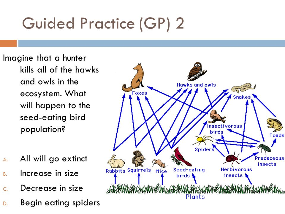 Guided Practice (GP) 2 Imagine that a hunter kills all of the hawks and owls in the ecosystem. What will happen to the seed-eating bird population? A.