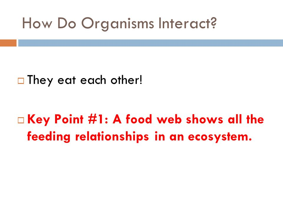  They eat each other!  Key Point #1: A food web shows all the feeding relationships in an ecosystem. How Do Organisms Interact?