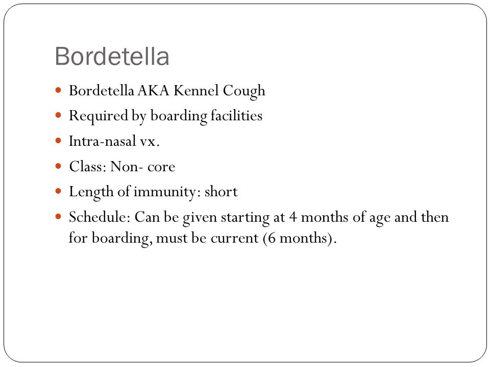 Bordetella Bordetella AKA Kennel Cough Required by boarding facilities Intra-nasal vx.
