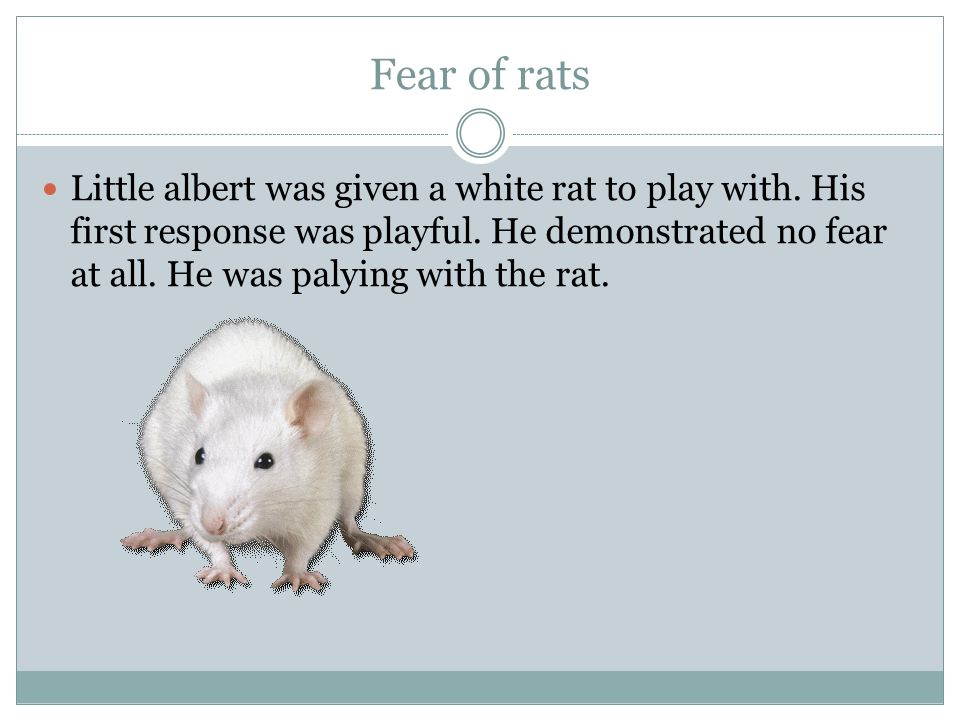 Fear of rats Little albert was given a white rat to play with.