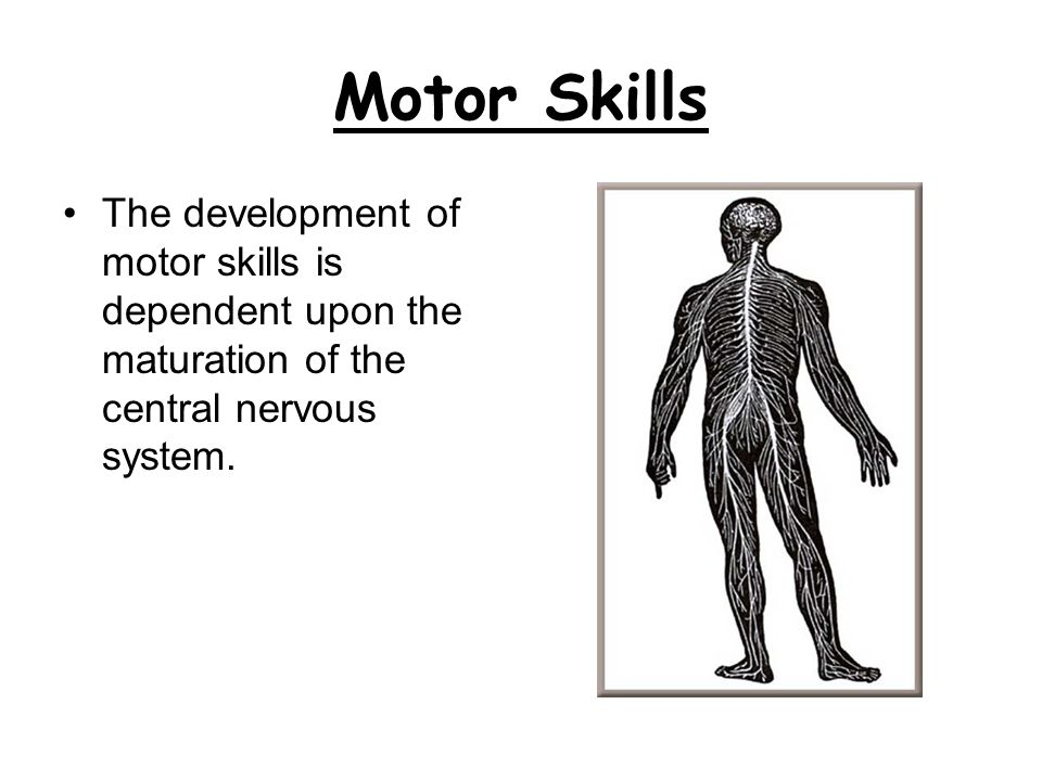 Motor Skills The development of motor skills is dependent upon the maturation of the central nervous system.