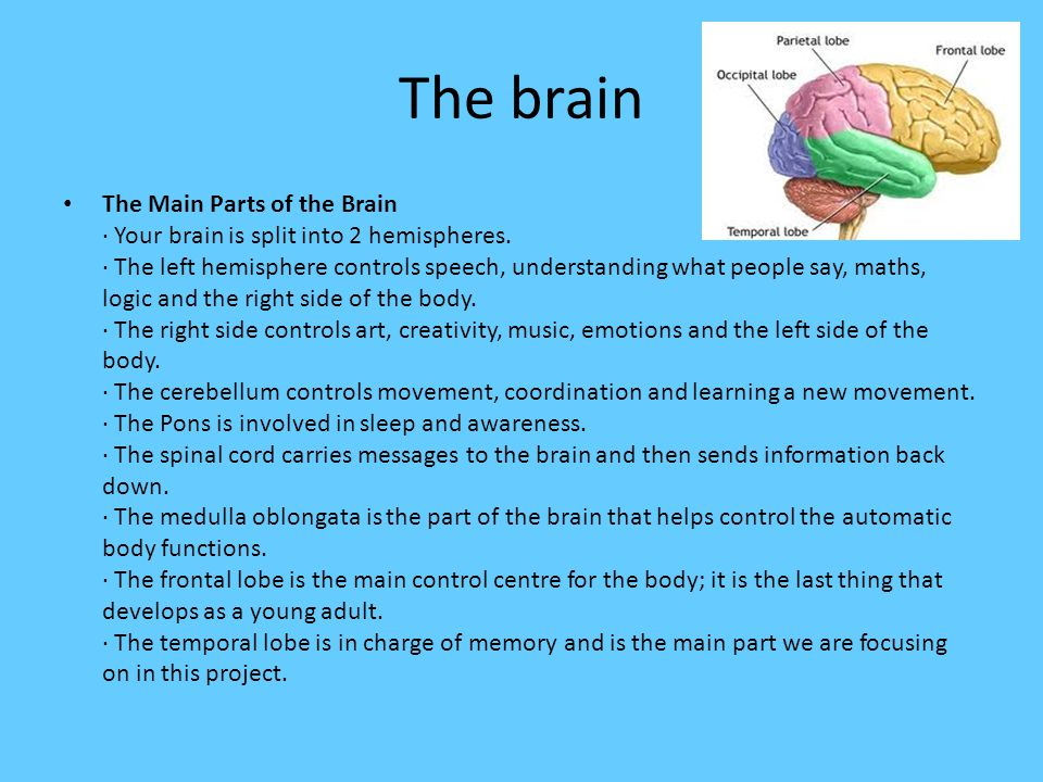 The brain The Main Parts of the Brain · Your brain is split into 2 hemispheres.