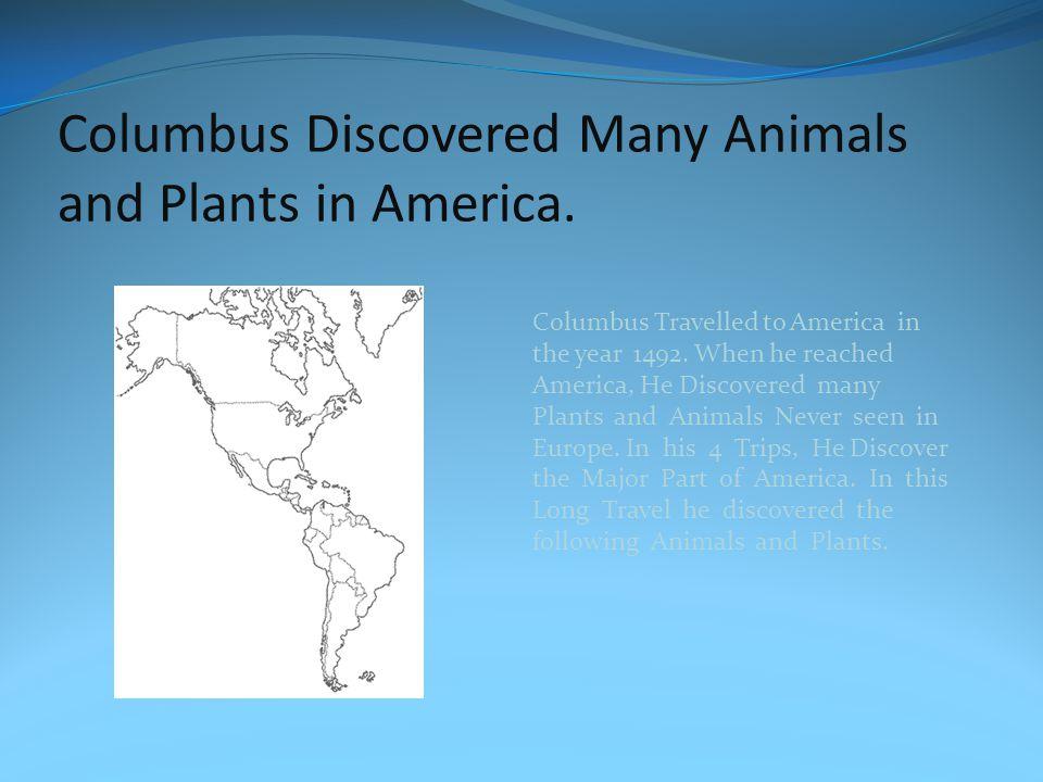 Animals: