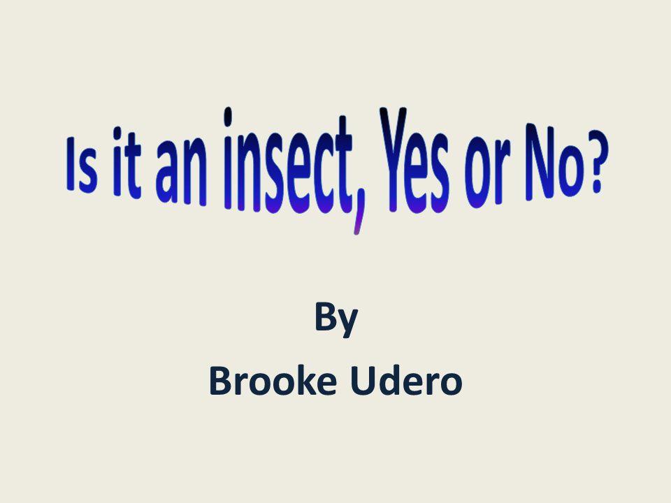 By Brooke Udero