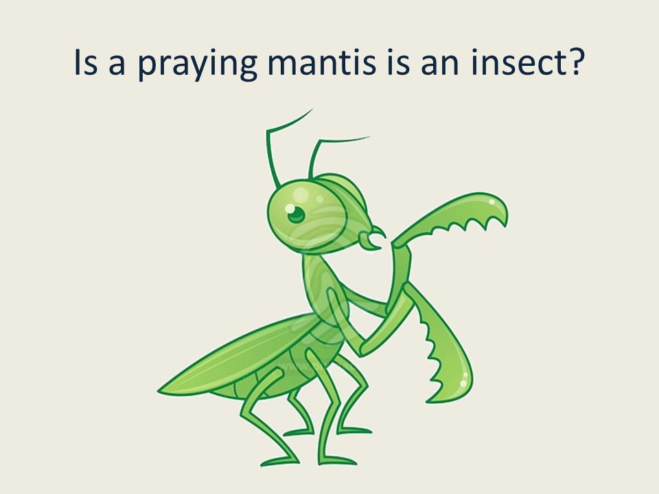 Yes, a praying mantis is an insect.It has three body segments.