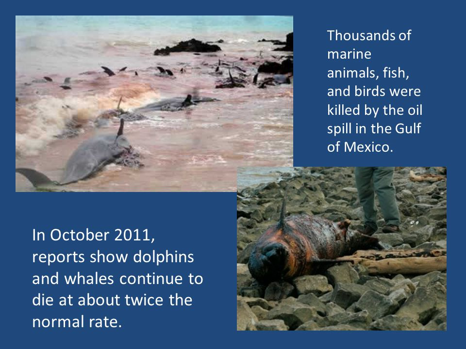 In October 2011, reports show dolphins and whales continue to die at about twice the normal rate.