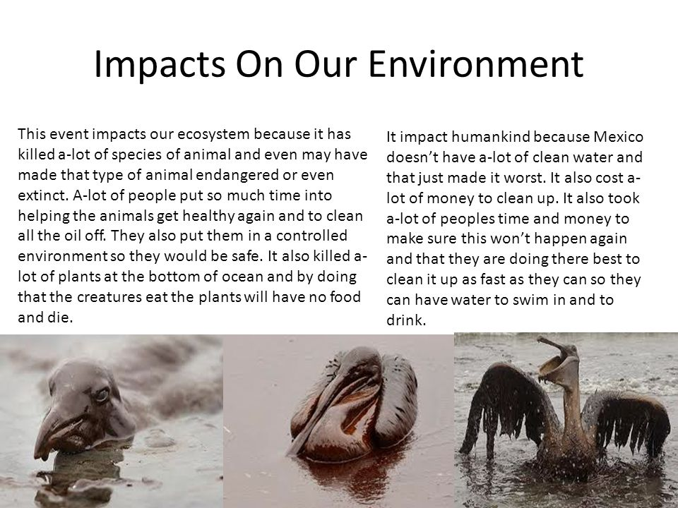 Impacts On Our Environment This event impacts our ecosystem because it has killed a-lot of species of animal and even may have made that type of anima