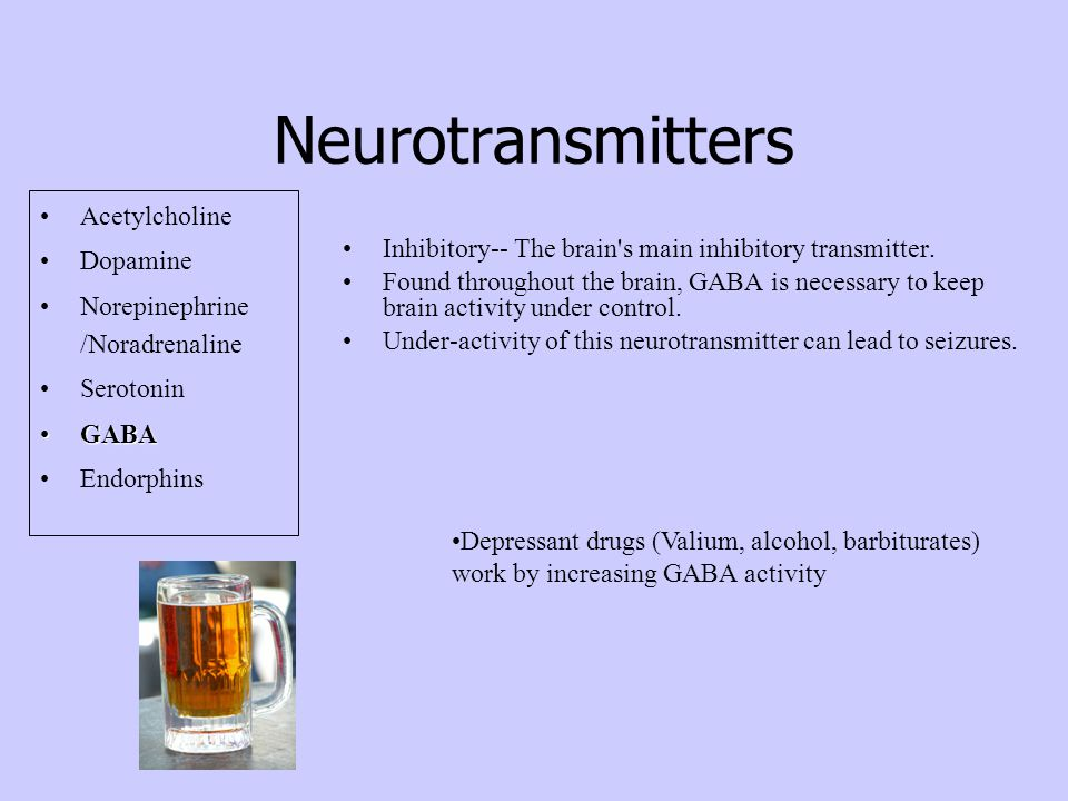 Neurotransmitters Acetylcholine Dopamine Norepinephrine /Noradrenaline Serotonin GABAGABA Endorphins Inhibitory-- The brain s main inhibitory transmitter.