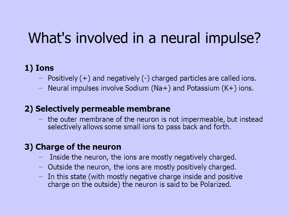 What's involved in a neural impulse? 1) Ions –Positively (+) and negatively (-) charged particles are called ions. –Neural impulses involve Sodium (Na