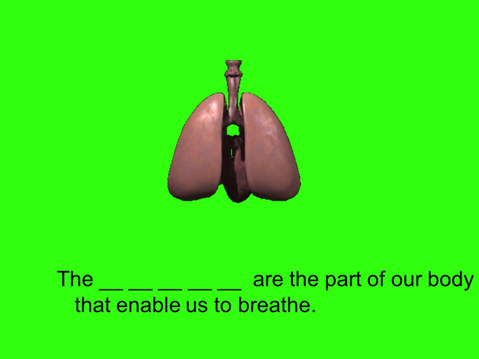 The __ __ __ __ __ are the part of our body that enable us to breathe.