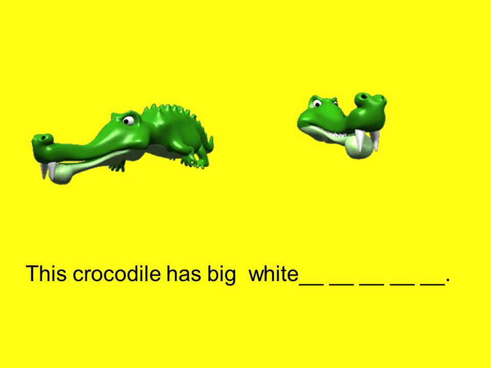 This crocodile has big white__ __ __ __ __.