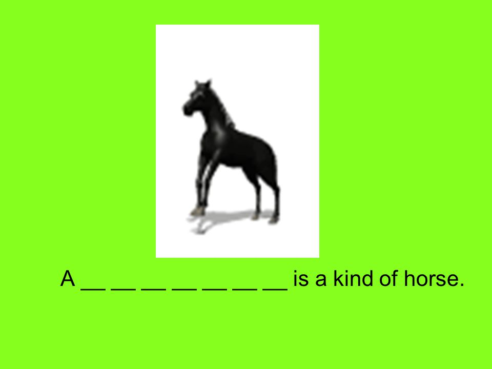 A __ __ __ __ __ __ __ is a kind of horse.