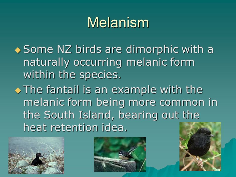 Melanism  Some NZ birds are dimorphic with a naturally occurring melanic form within the species.
