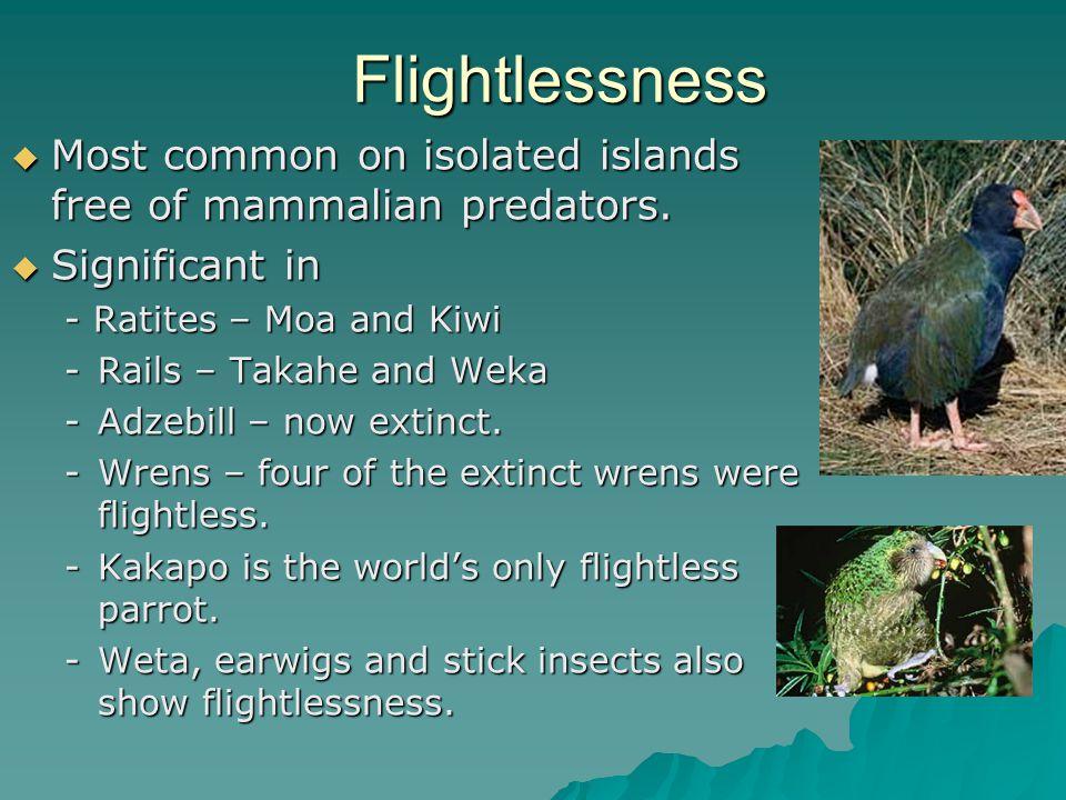 Flightlessness  Most common on isolated islands free of mammalian predators.
