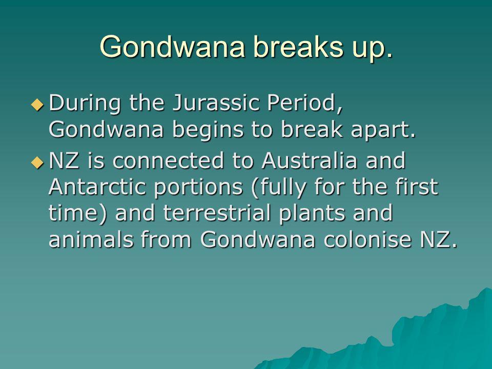 Gondwana breaks up.  During the Jurassic Period, Gondwana begins to break apart.