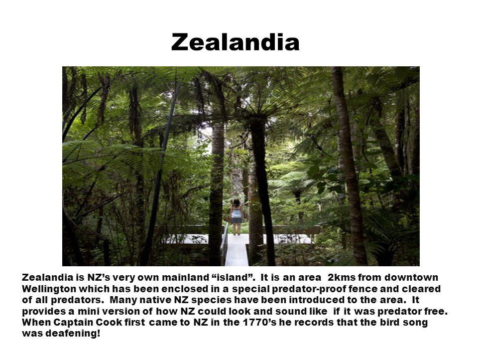 Zealandia Zealandia is NZ's very own mainland island .