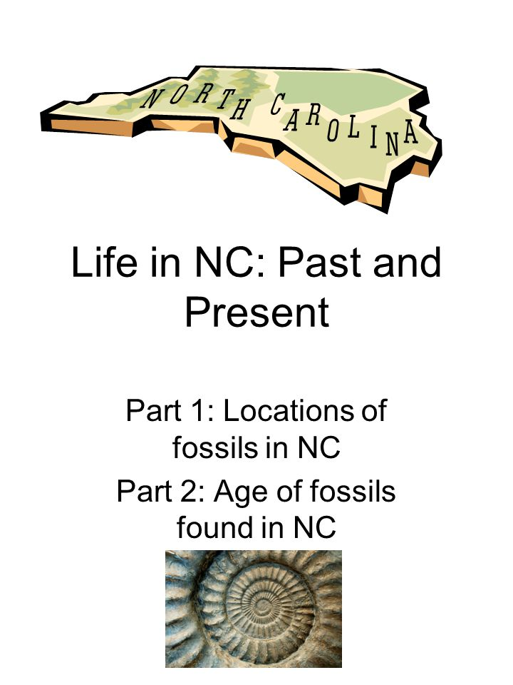 Part 1: Location of fossils in NC Objective: You are going to be working in groups to find the locations of fossils that have been found throughout NC (5.01, 5.05) Materials: –Map of NC –Stickers –Pen –Fossil information sheets Procedure: Using the fossil information sheets locate each of the counties that the fossils were found.