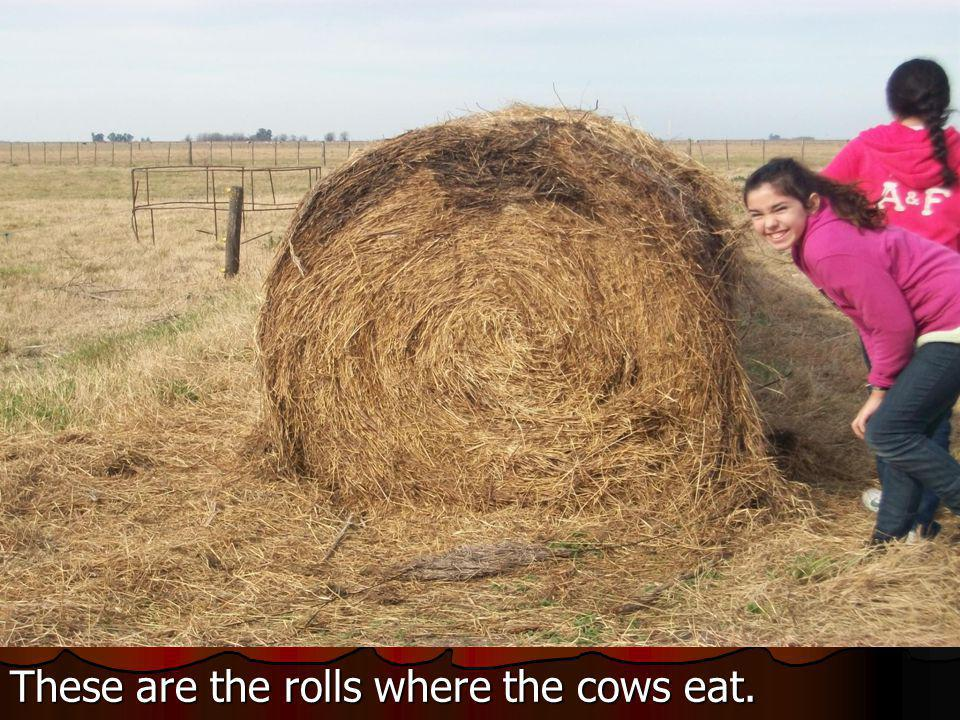 These are the rolls where the cows eat.