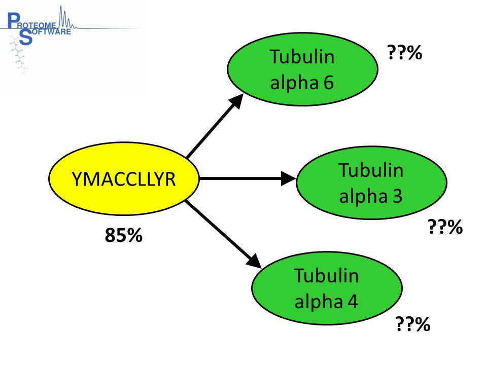 Tubulin alpha 6 Tubulin alpha 3 YMACCLLYR Tubulin alpha 4 85% %