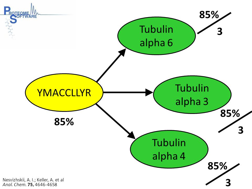 Tubulin alpha 6 Tubulin alpha 3 YMACCLLYR Tubulin alpha 4 85% 3 3 3 Nesvizhskii, A.