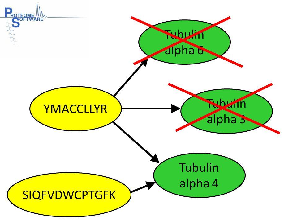 Tubulin alpha 6 Tubulin alpha 3 YMACCLLYR SIQFVDWCPTGFK Tubulin alpha 4