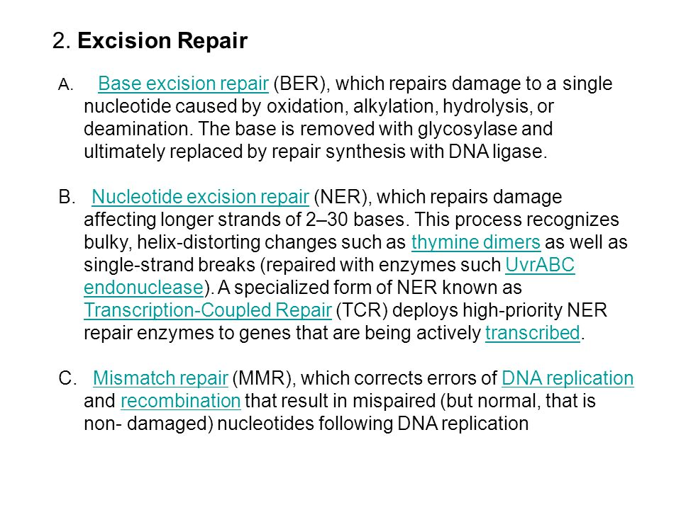 2. Excision Repair A. Base excision repair (BER), which repairs damage to a single nucleotide caused by oxidation, alkylation, hydrolysis, or deaminat